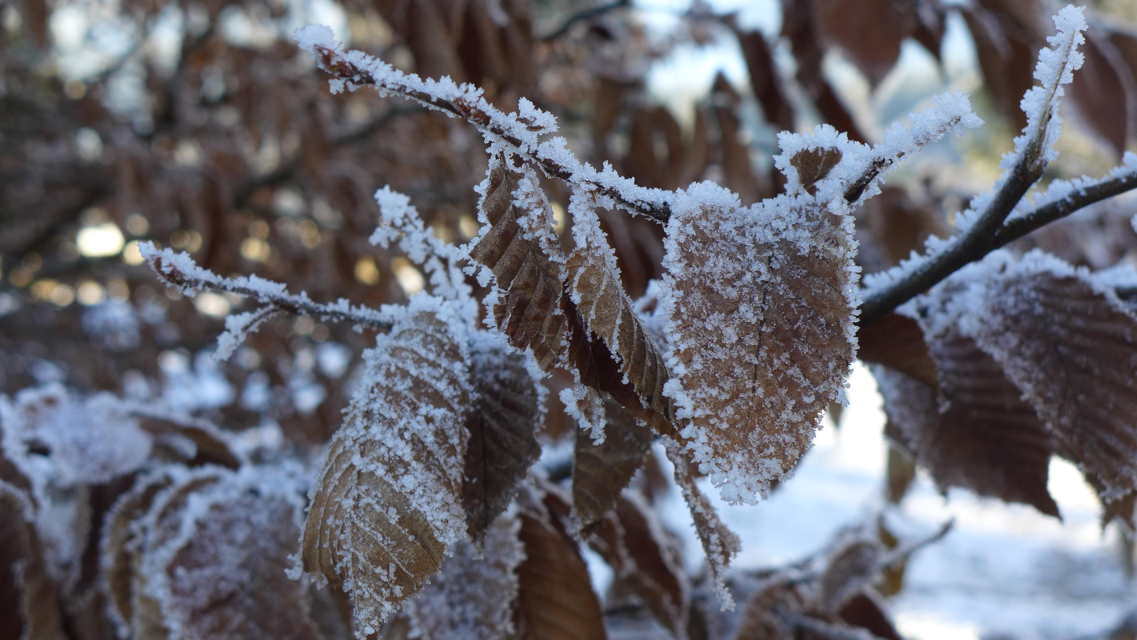 Winterfoto-Troadkasten